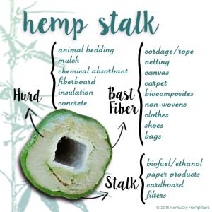 Diagram of the Hemp Stalk.